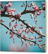 Flowering Branches Wood Print