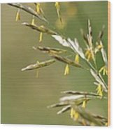 Flowering Brome Grass Wood Print