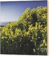 Flowering Bush Wood Print