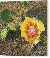 Flowering Cactus Wood Print