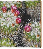 Flowering Cactus Wood Print
