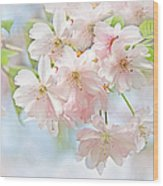 Flowering Cherry Tree Blossoms Wood Print