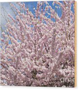 Flowering Cherry Tree Wood Print