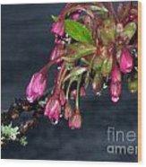 Flowering Cherry Trees Buds Wood Print