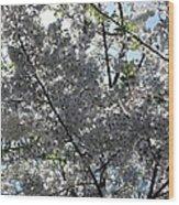 Flowering Cherry - White Wood Print