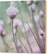 Flowering Chives I Wood Print