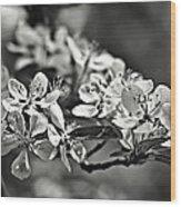 Flowering Crabapple 2 Bw Wood Print