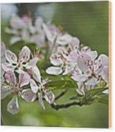 Flowering Crabapple 2 Wood Print