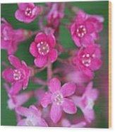 Flowering Currant Wood Print