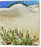 Flowering Dunes - Outer Banks Wood Print by Dan Carmichael