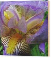Flowering Iris Wood Print