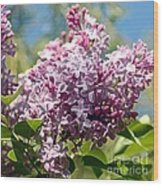 Flowering Lliac Bush Wood Print