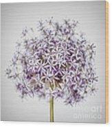 Flowering Onion Flower Wood Print