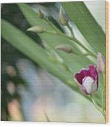 Flowering  Orchid Stem Wood Print