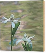 Flowering Pond Plant Wood Print