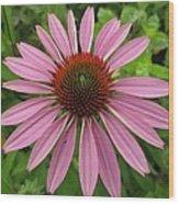 Flowering Purple Cone Flower Wood Print