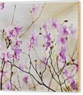 Flowering Rhododendron Wood Print