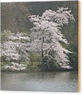 Flowering Tree At The Pond Wood Print