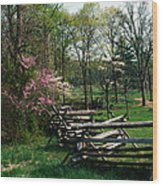 Flowering Trees In Bloom Along Fence Wood Print