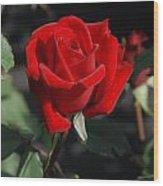 Flowers 452 Wood Print