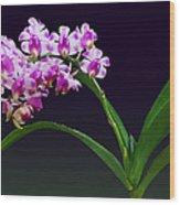 Flowers - Aerides Lawrenciae X Odorata Orchid Wood Print