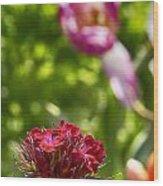 Flowers At Dallas Arboretum V14 Wood Print