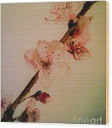 Flowers - Cherry Blossoms - Blooms Wood Print