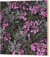 Flowers Dallas Arboretum V16 Wood Print