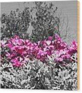 Flowers Dallas Arboretum V17 Wood Print