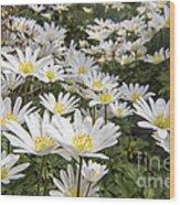 Flowers Galore Wood Print