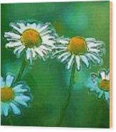Flowers In Sunlight Wood Print