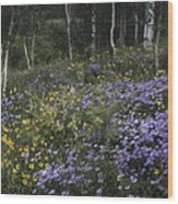 Flowers In The Aspen Forest Wood Print
