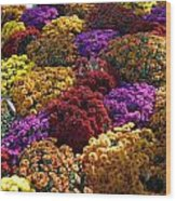 Flowers Near The Grand Palais Off Of Champ Elysees In Paris France   Wood Print