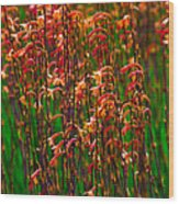 Flowers Of Fire Wood Print