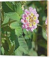 Flowers Of Pink And Orange Wood Print