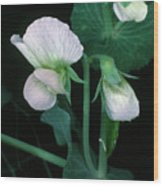 Flowers Of The Garden Pea Wood Print