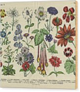 Flowers Of The Garden, Victorian Wood Print