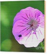 Flowers Of Uttarakand Wood Print