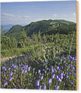 Flowers On Summer Mountain  Wood Print