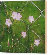 Flowers... On The Fence Wood Print