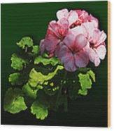 Flowers - Pale Pink Geranium Wood Print