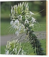 Flowers Pt. 1 Wood Print