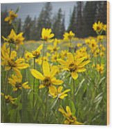 Flowers That Are Wild Wood Print