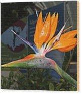 Flowers - Us Botanic Garden - 011311 Wood Print