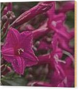 Flowers-waimea Arboretum  Wood Print
