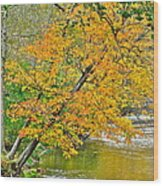 Flowing River Leaning Tree Wood Print