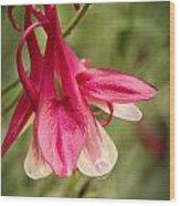 Fl.pink4 Wood Print