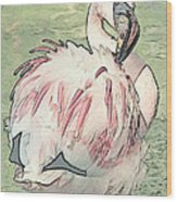 Fluffing Flamingo  Wood Print