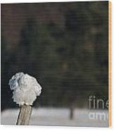 Fluffing On A Fence Post Wood Print