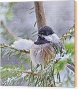 Fluffy Chickadee Wood Print